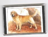GOLDERN RETRIEVER LARGE FRIDGE MAGNET 5